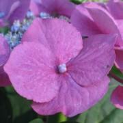 pflanzenbilder008