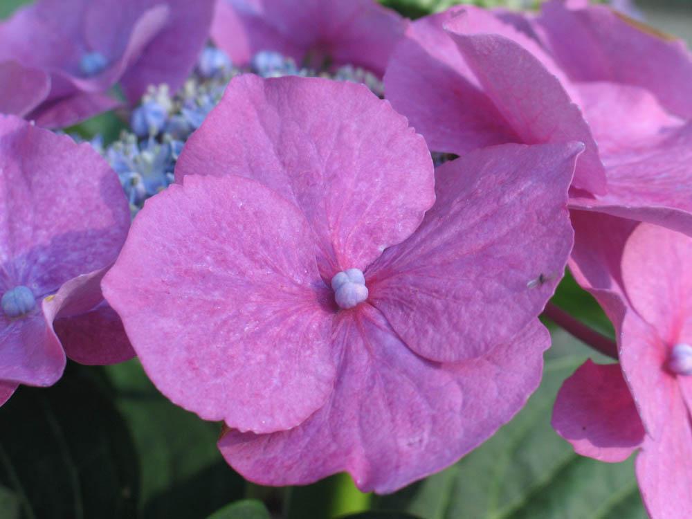Bepflanzungsplan gartenbau gr pel for Pflanzen liefern